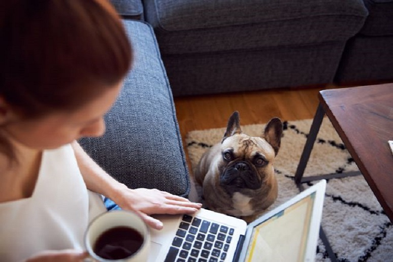 Photo of women working from home with dog